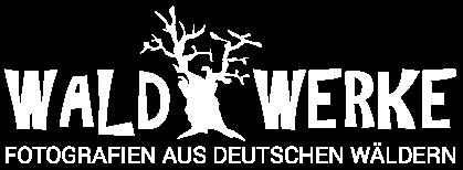 Waldfotografien aus Deutschland